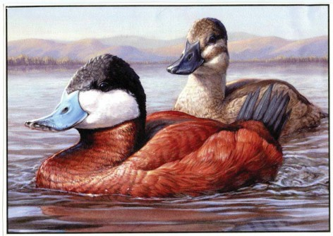 Duck Stamp? Why Us?