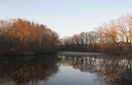 Birding the Charles River Peninsula, Needham, Massachusetts