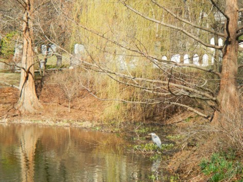 Respecting Birds, People, and History at Mount Auburn Cemetery